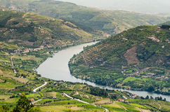Vineyars no vale de Douro fotos de stock royalty free