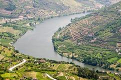 Vineyars no vale de Douro foto de stock royalty free
