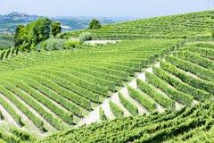 Vineyars, Piémont, Italie image stock