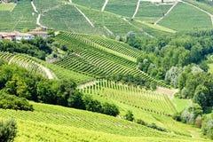 Vineyars, Piémont, Italie images libres de droits