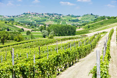 Vineyars in Piedmont Royalty Free Stock Image