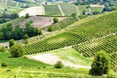 Vineyars, Piedmont, Italy Stock Photo