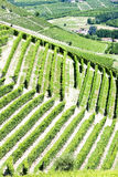 Vineyars, Piedmont, Italy Stock Photography
