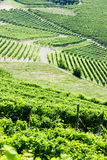 Vineyars, Piedmont, Italy Stock Images
