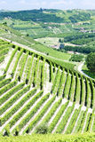Vineyars, Piedmont, Italy Royalty Free Stock Image