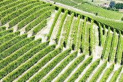 Vineyars, Piedmont, Italy Royalty Free Stock Image