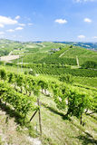 Vineyars, Piedmont, Italy Royalty Free Stock Photos
