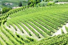 Vineyars, Piedmont, Italy Stock Photography