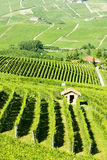 Vineyars, Piedmont, Italy Stock Photos