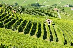 Vineyars, Piemonte, Italia Immagine Stock