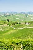 Vineyars, Piemonte, Italia Fotografia Stock
