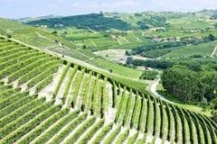 Vineyars, Piemonte, Italia Fotografia Stock Libera da Diritti