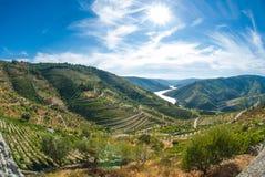 Vineyars in valle del Duero Immagini Stock Libere da Diritti