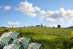 Vineyeard在Chianti,托斯卡纳,意大利,著名地产 免版税库存照片