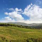 Vineyeard in Chianti, Tuscany, Italy, famous lands stock photos