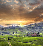 Vineyeard in Chianti, Tuscany, Italy, famous lands royalty free stock photo
