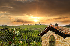 Vineyeard in Chianti, Tuscany, Italy, famous lands Royalty Free Stock Images