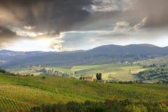 Vineyeard dans Chianti, Toscane, Italie, cordons célèbres photos libres de droits