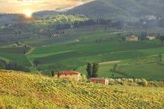 Vineyeard dans Chianti, Toscane, Italie, terres célèbres photos libres de droits