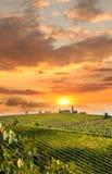 Vineyeard dans le chianti, Toscane, Italie, terres célèbres photo stock