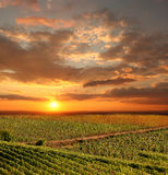 Vineyeard em Chianti, Toscânia, Italia, terras famosas imagens de stock royalty free