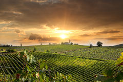 Vineyeard em Chianti, Toscânia, Italia, terras famosas foto de stock