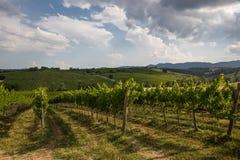 Vineyeard Stock Image