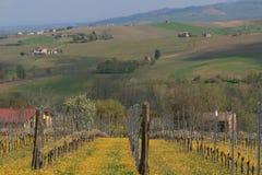 Vineyhard su terreno coltivabile (Vitigno in Campania) Fotografie Stock