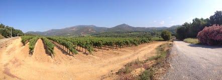 Vinfält Arkivfoto