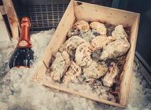 Vinflaska och ostron royaltyfria foton