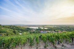 Vingård över Rollsdorf i Mansfelder land royaltyfri foto
