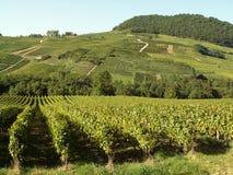 vingård Royaltyfri Fotografi
