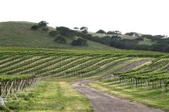 vingård 2 Arkivbilder