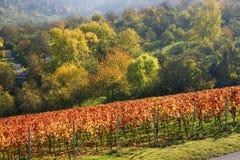 vingård 2 royaltyfri fotografi