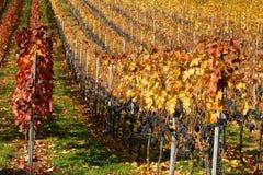 vingård 3 fotografering för bildbyråer