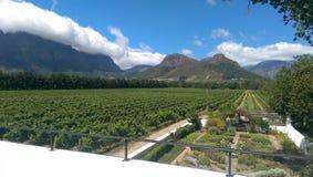 1 vingård Arkivbild