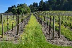 vingård 68 Arkivbild