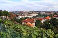 Vingård av Prague royaltyfri bild