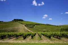 Vingård för italienareTuscany vin Royaltyfri Bild