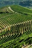 vingård för kullnummer två Arkivfoto