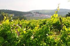 vingård för lisbon obidosportugal by arkivfoto