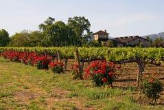 vingård för napasolnedgångdal Arkivbild