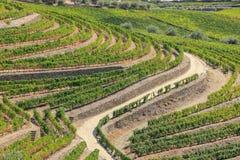 vingård för sammansättningsliggandenatur Arkivfoton
