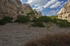 Vingård i öknen Arkivbild