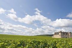 Vingård i Bourgogne, Burgundy Arkivbild
