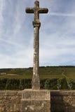 Vingård i burgundy, france Arkivfoto