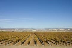 Vingård i centrala Kalifornien royaltyfri fotografi
