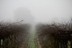 Vingård i dimma Royaltyfri Fotografi