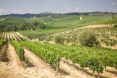 Vingård i området av produktion av Vino Nobile, Montepulciano, Italien Royaltyfri Bild