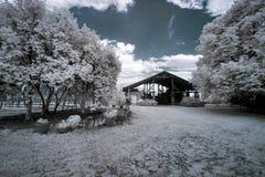 Vingård i Polen Royaltyfri Bild